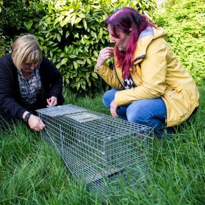 The Fox Project is passionate about sharing their knowledge with the public. Here a member of the public is being shown how to set a humane cub trap.