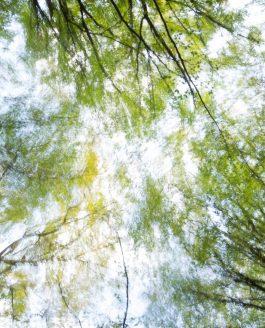 Pine Impression