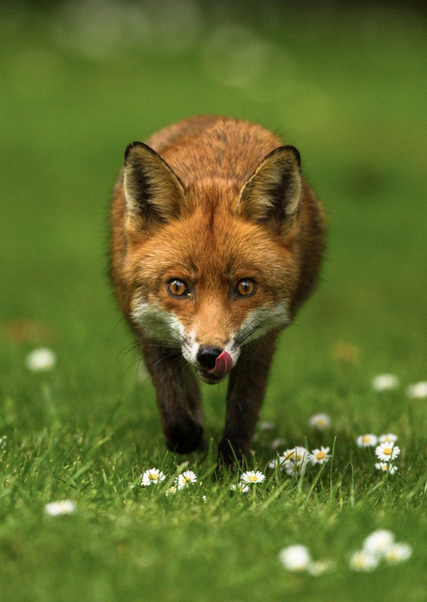 BWPA and Project Fox
